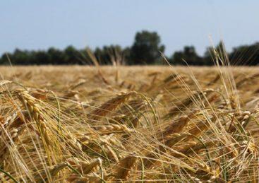 Høsttraditioner og høstsange