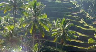 Guderns ø: Bali – det kulturelle paradis